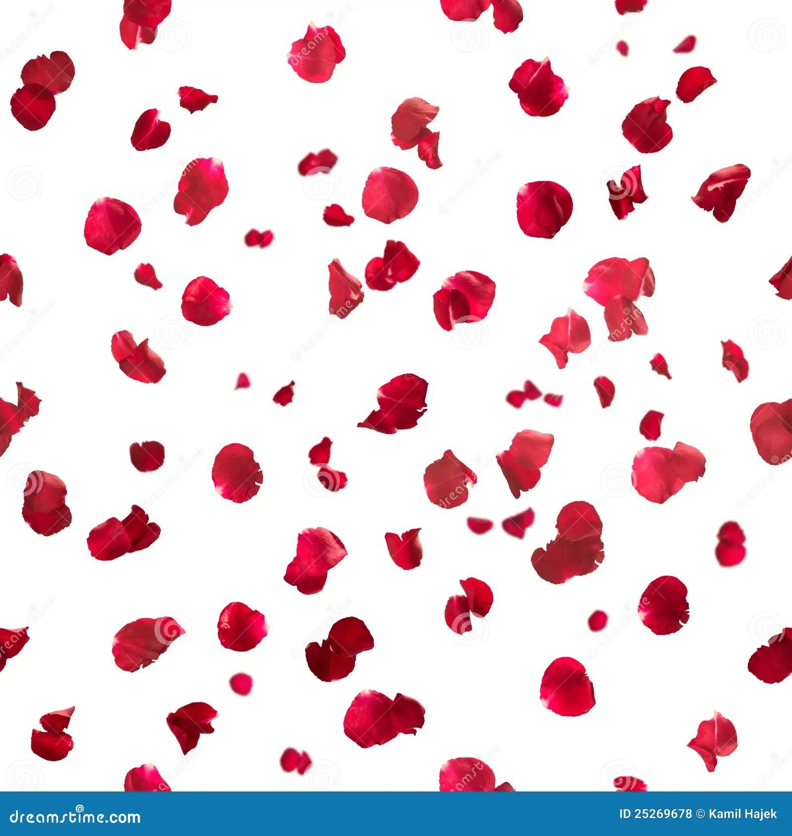 Rose Petals Falling Wallpaper Transparent Gif Seamless Rose Petals Royalty Free Stock Photos Image
