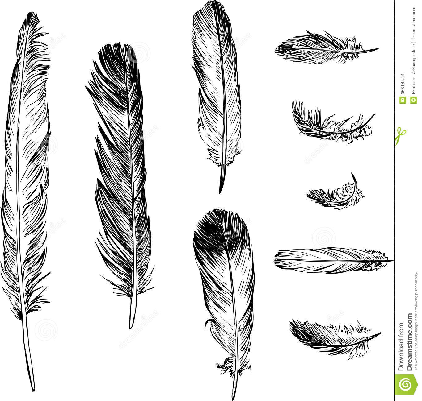 Disegno Piuma Set Of Plumes Stock Vector Illustration Of Linear