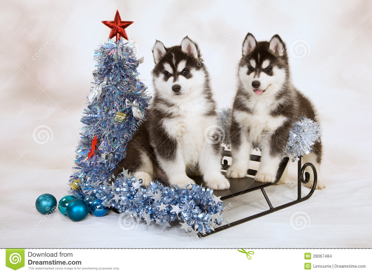 Cute Merry Christmas Wallpaper Dogs Siberian Husky Puppies Stock Photo Image Of Present