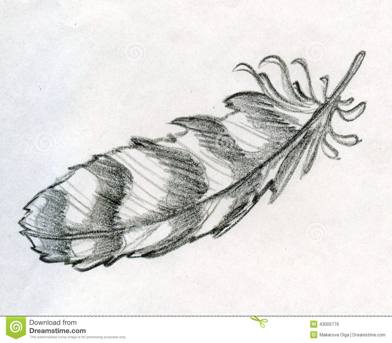 Disegno Piuma Sketched Eagle Feather Stock Illustration Image 43005776