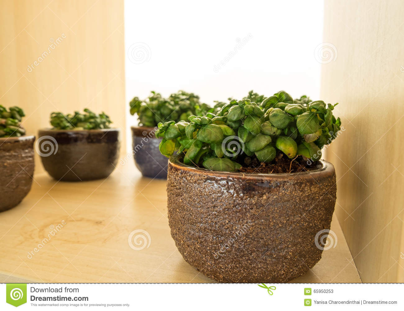 Indoor Small Plants Small Plants Indoor In Small Pots Stock Image Image Of