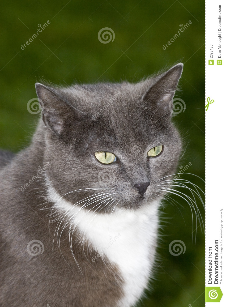 Garden Dreams Smokey The Cat Royalty Free Stock Photo - Image: 2328485