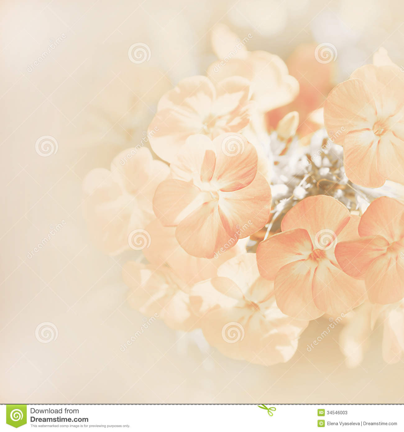 Elegant 3d Desktop Wallpaper Soft Blur Background With Flowers Stock Photos Image