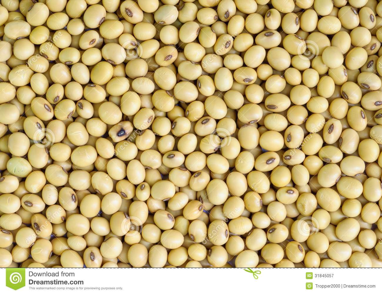 soy bean royalty free stock photography