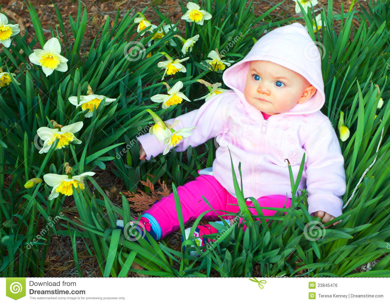 Baby Girl Blog Spring Baby In Daffodils Stock Photo Image Of Colored