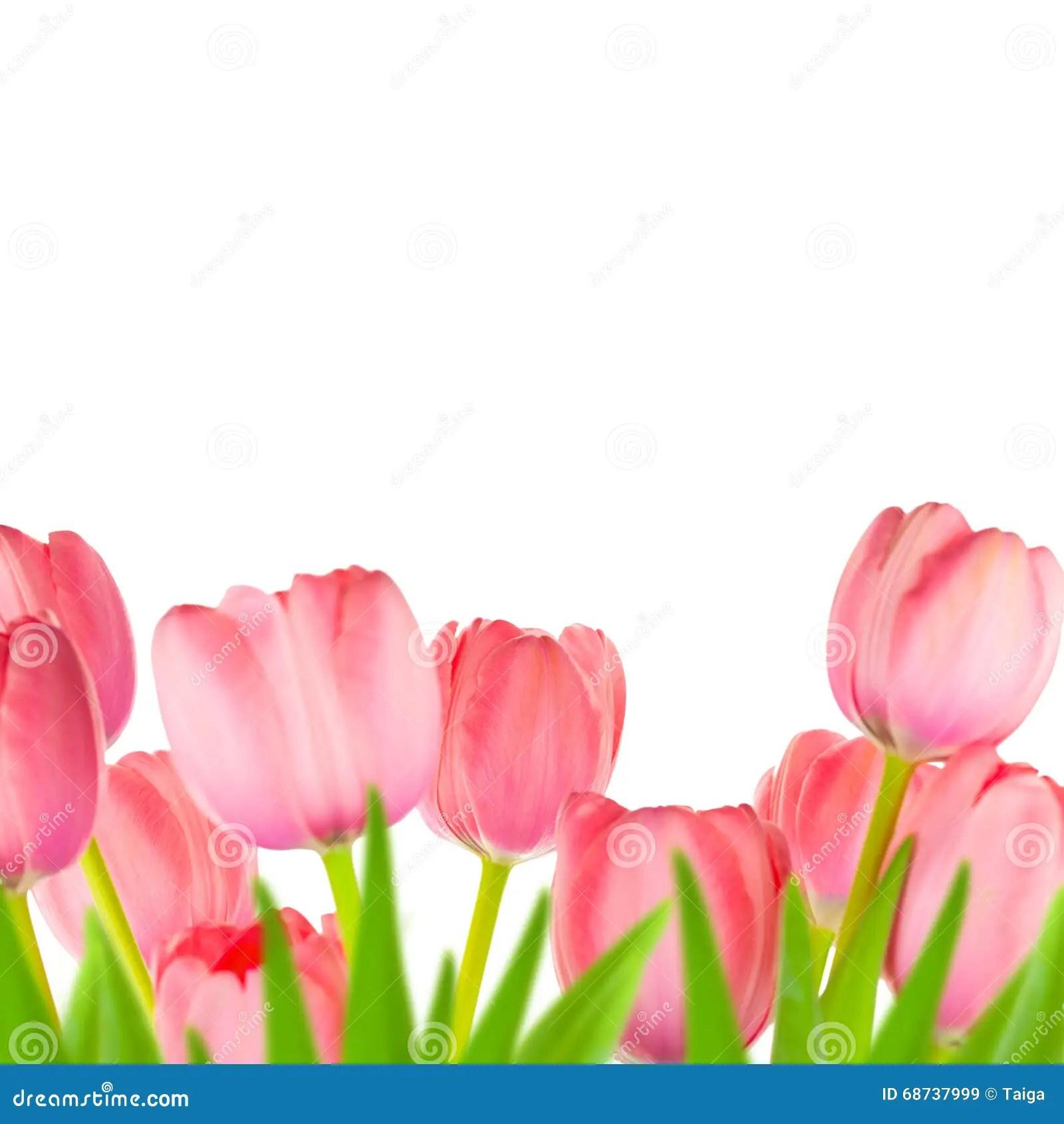 Cute Watercolor Wallpaper Spring Gentle Light Pink Tulips Border Stock Image