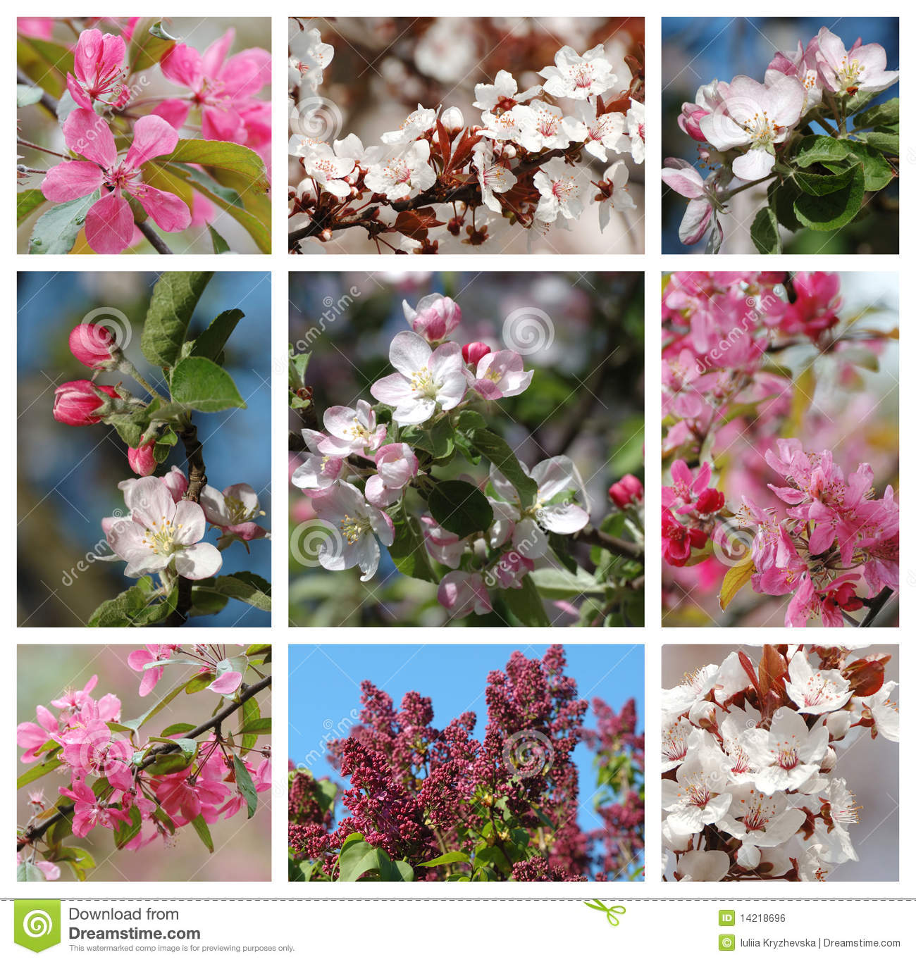Collage Frame Calendar Amazon Collage Calendar Prime Eligible Spring Season Nature Collage With Flowers Stock Photo