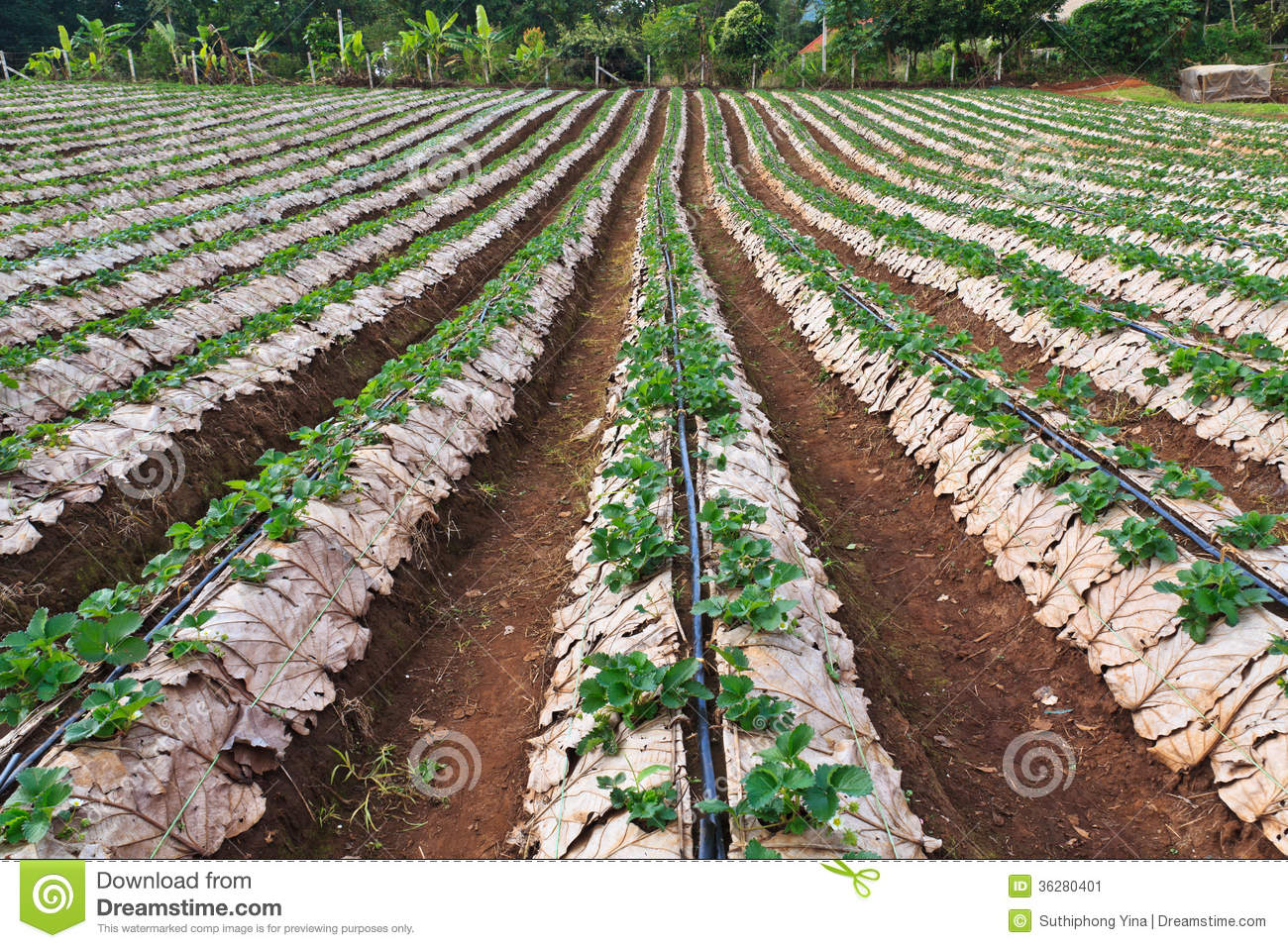 Business plan agriculture