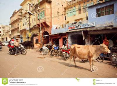 Street Life With Cafe, Driving Motorcycles And Walking Cow ...