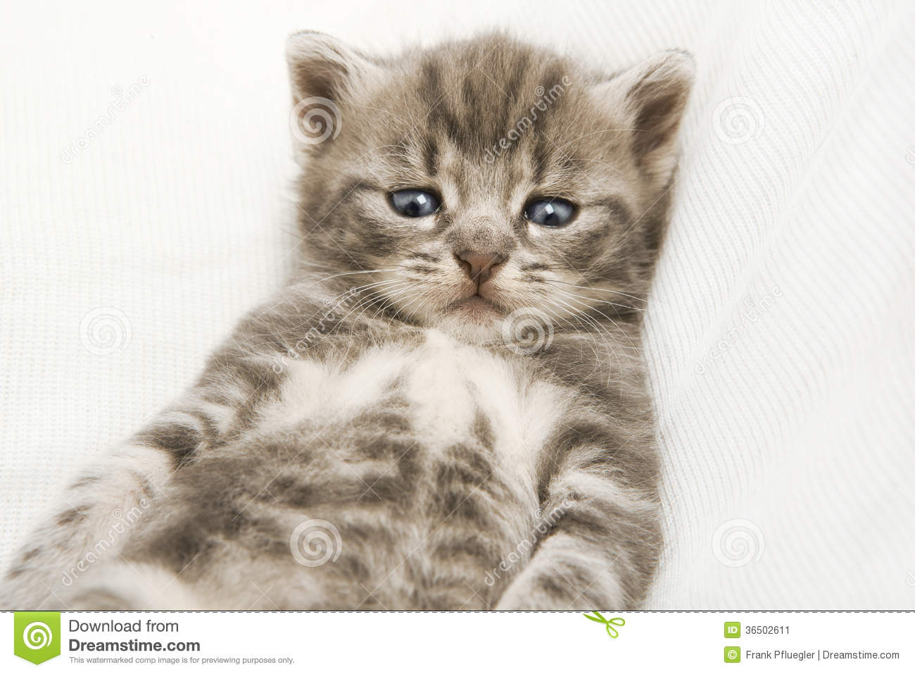 Cute Little Gray Cat For Wallpaper Striped Baby Cat Stock Image Image Of Nature Heap Relax