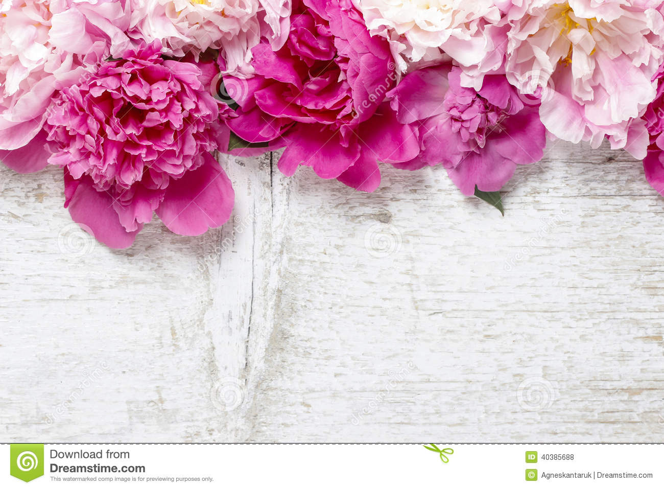 Peony Love Quote Wallpaper Stunning Pink Peonies On White Rustic Wooden Background
