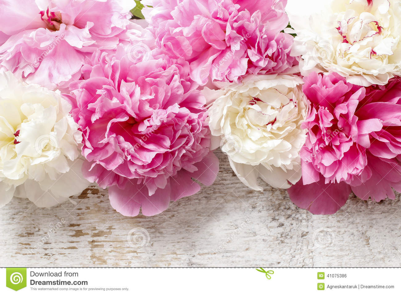 Peony Love Quote Wallpaper Stunning Pink Peonies Yellow Carnations And Roses Stock