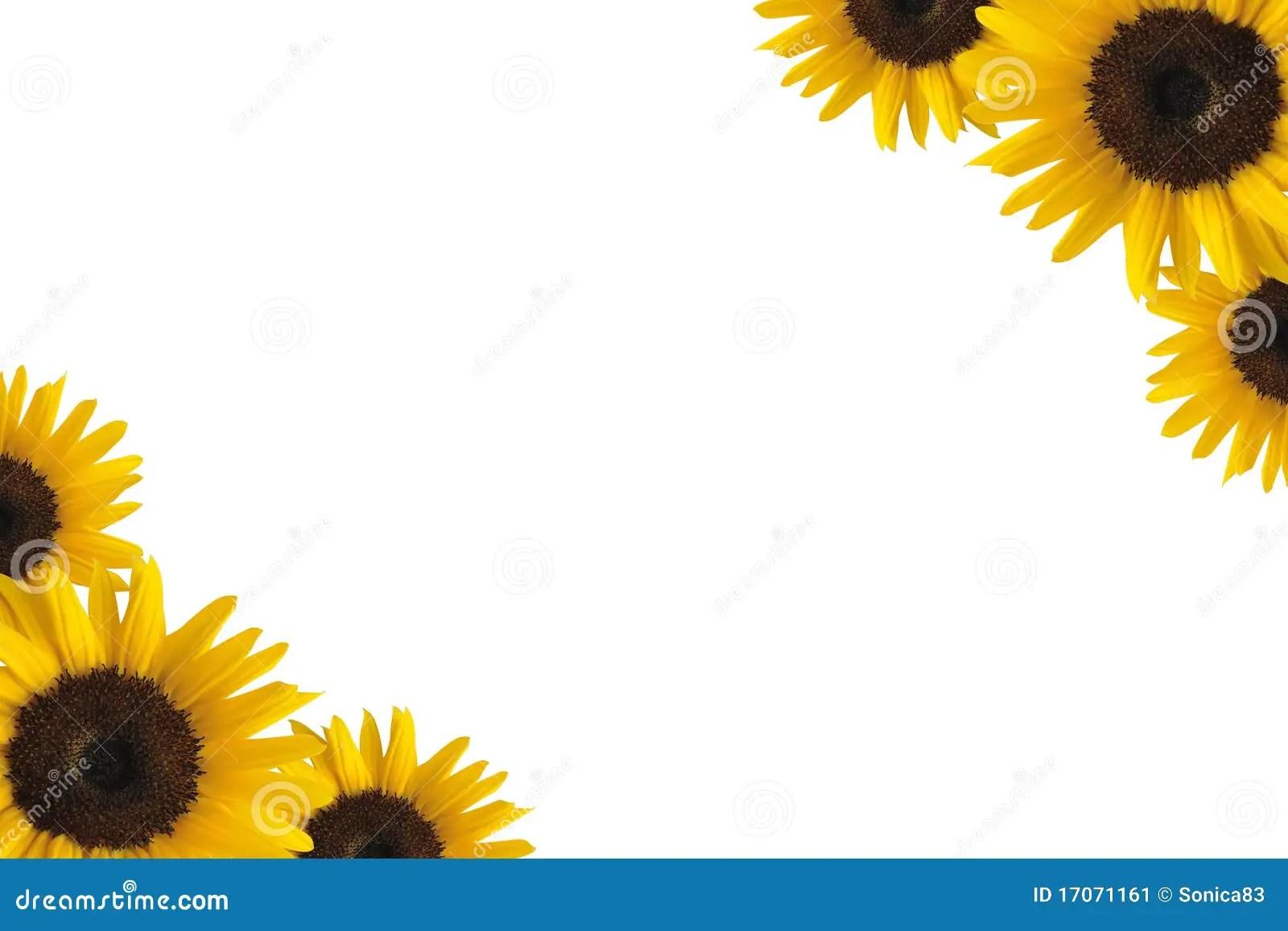 Fall Wooden Wallpaper Sunflower Border Stock Image Image Of Flora Beauty