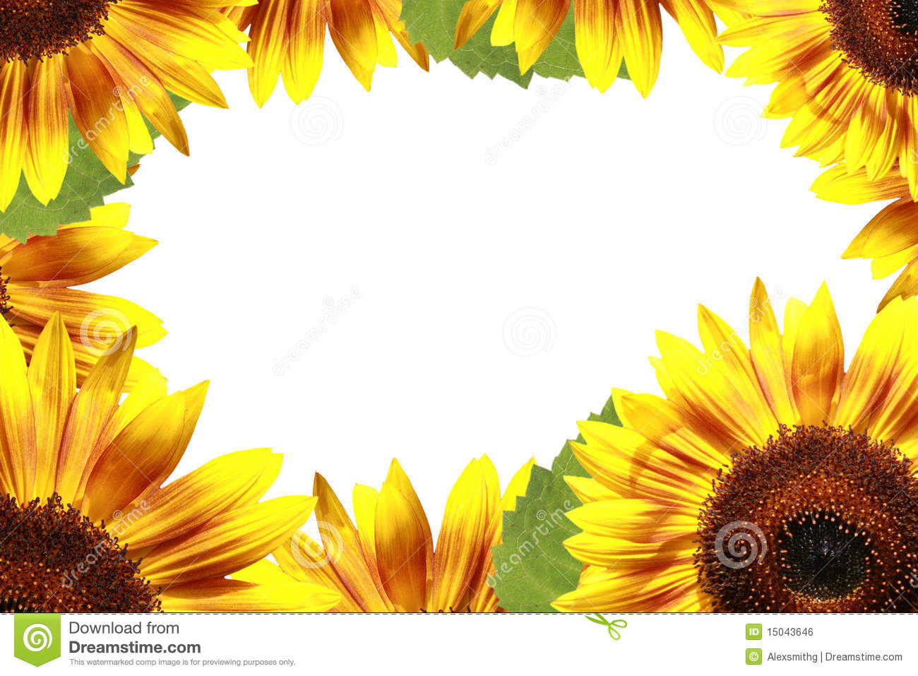 3d Sunflower Wallpaper Sunflower Frame Royalty Free Stock Image Image 15043646