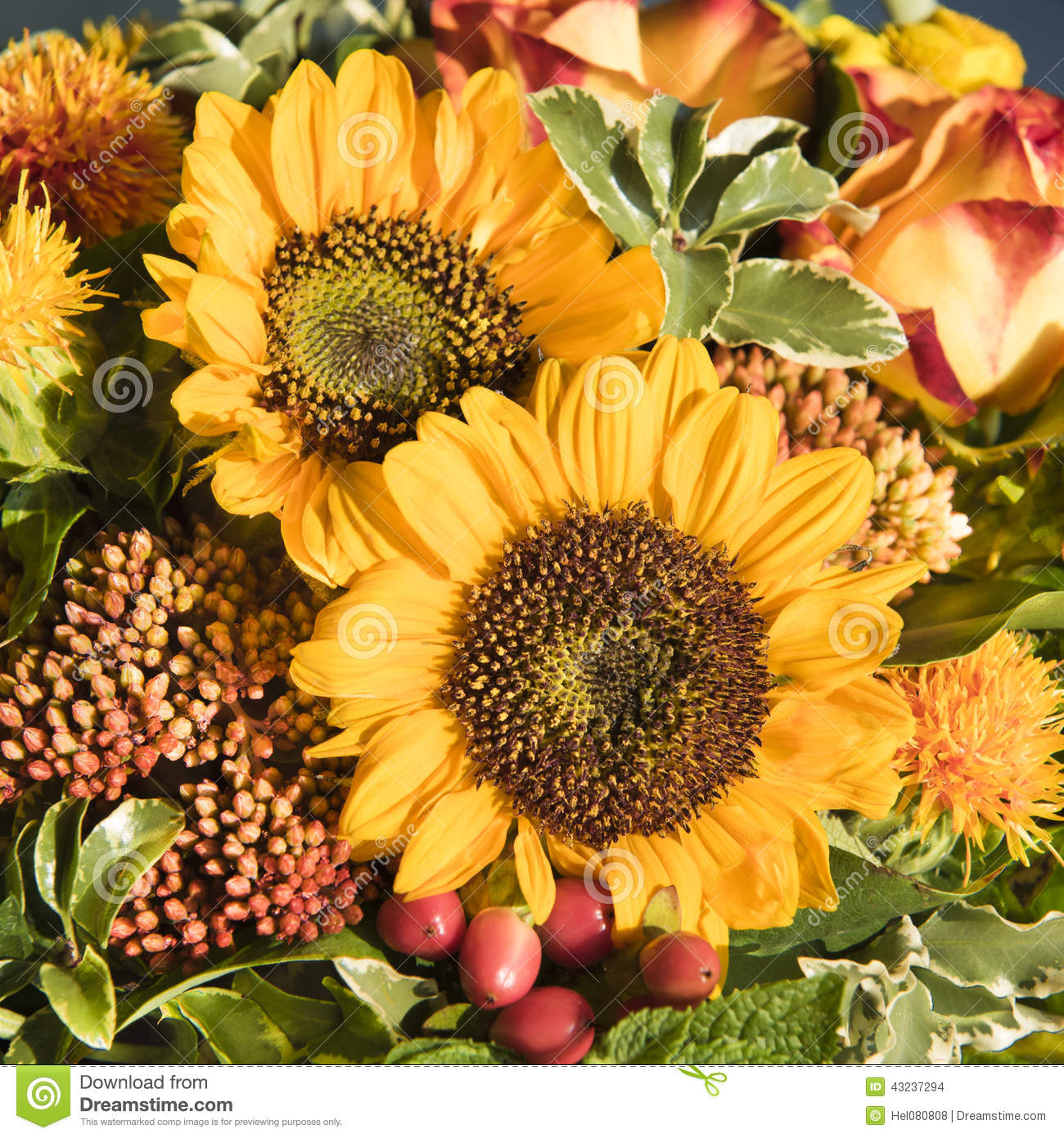 Late Fall Wallpaper Sunflowers And Fall Flowers Stock Photo Image 43237294