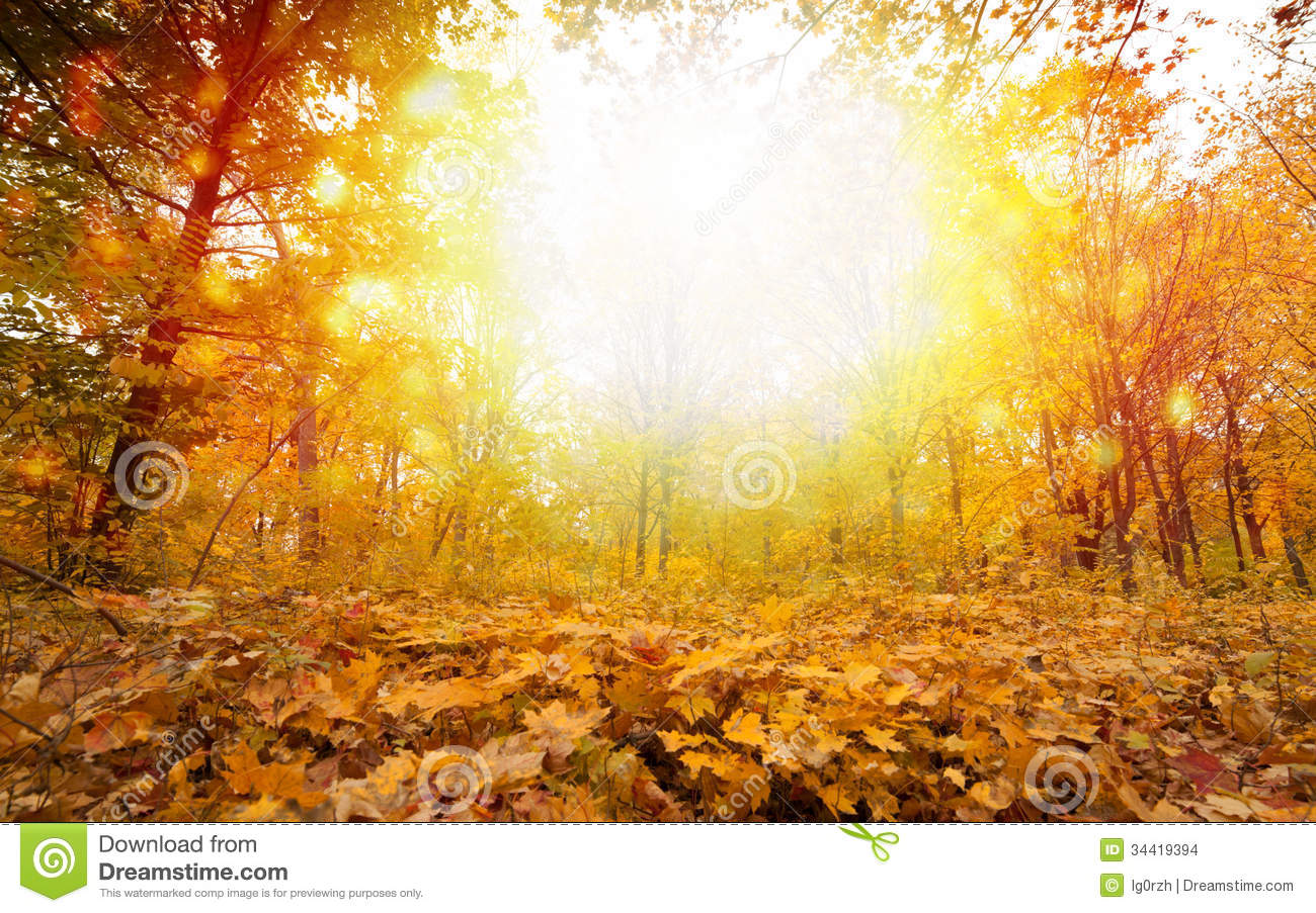 Foggy Fall Wallpaper Sunny Fall Day In Park Stock Images Image 34419394