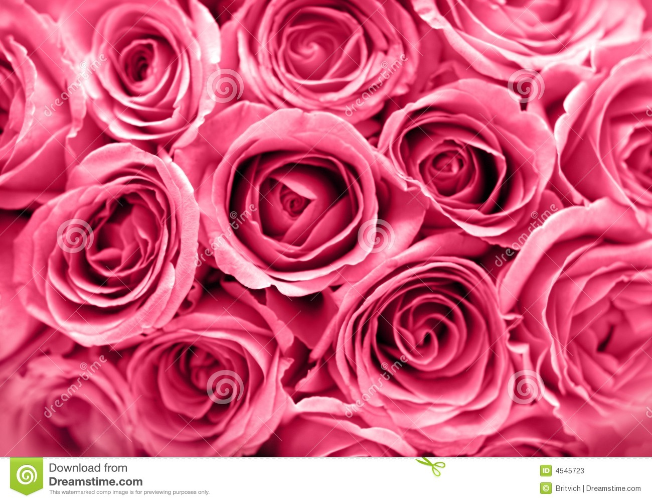 Pretty Wallpapers Rose Quotes Tło R 243 żowe R 243 że Obraz Stock Obraz Złożonej Z Wita