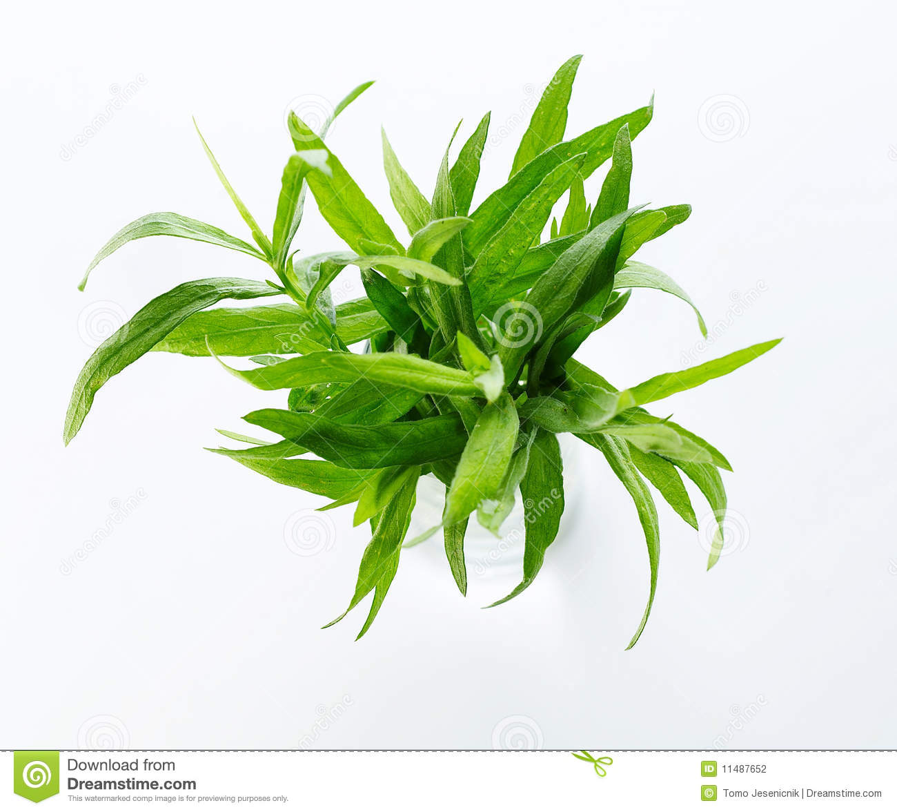 Different herbs royalty free stock image image 16265346 - Different Herbs Royalty Free Stock Image Image 16265346 Tarragon Herb Stock Photography Tarragon Herb Fresh Download
