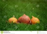 Three Halloween Pumpkins On Green Grass Royalty Free Stock ...