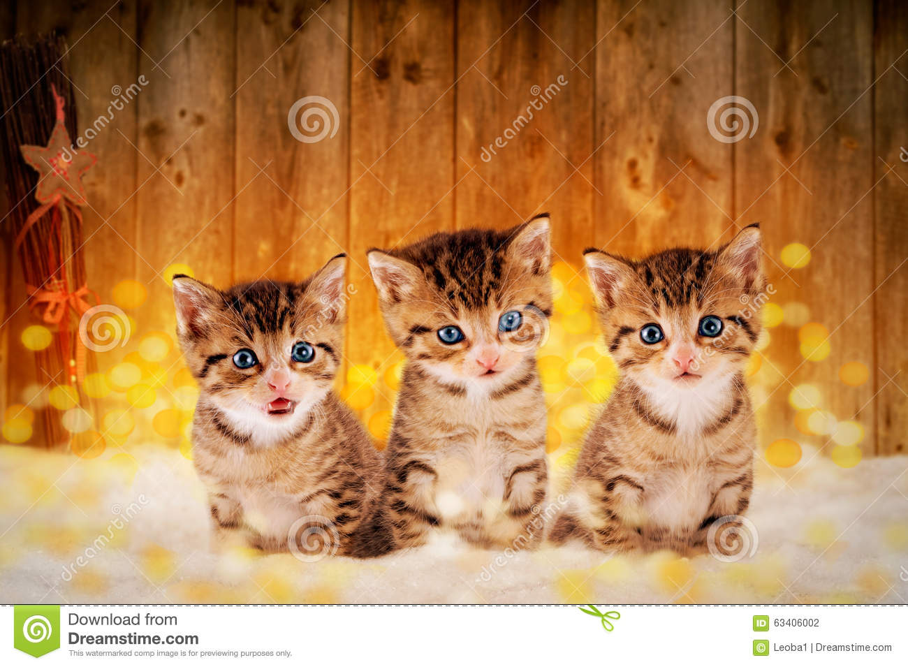 Cute Christmas Kitten Wallpaper Three Little Kittens Sitting In The Snow With Christmas