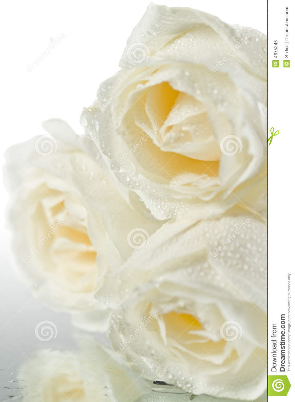 Wallpaper 3d Animation Free Download Three White Roses With Water Drops Royalty Free Stock