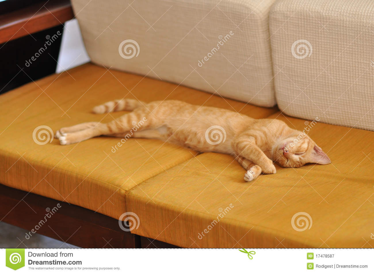 Lying On The Sofa Tiger Cat Sleep Sofa Stock Image. Image Of Couch, Fluffy
