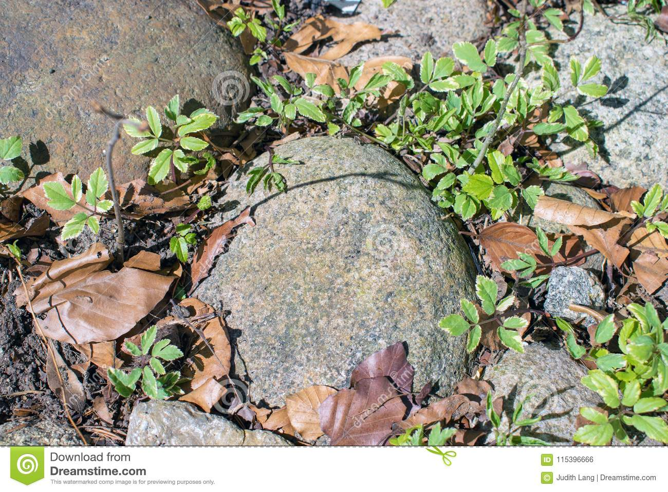 Backyard Clean Up Rocks Plants And Leaves Spring Clean Up Time Stock Photo