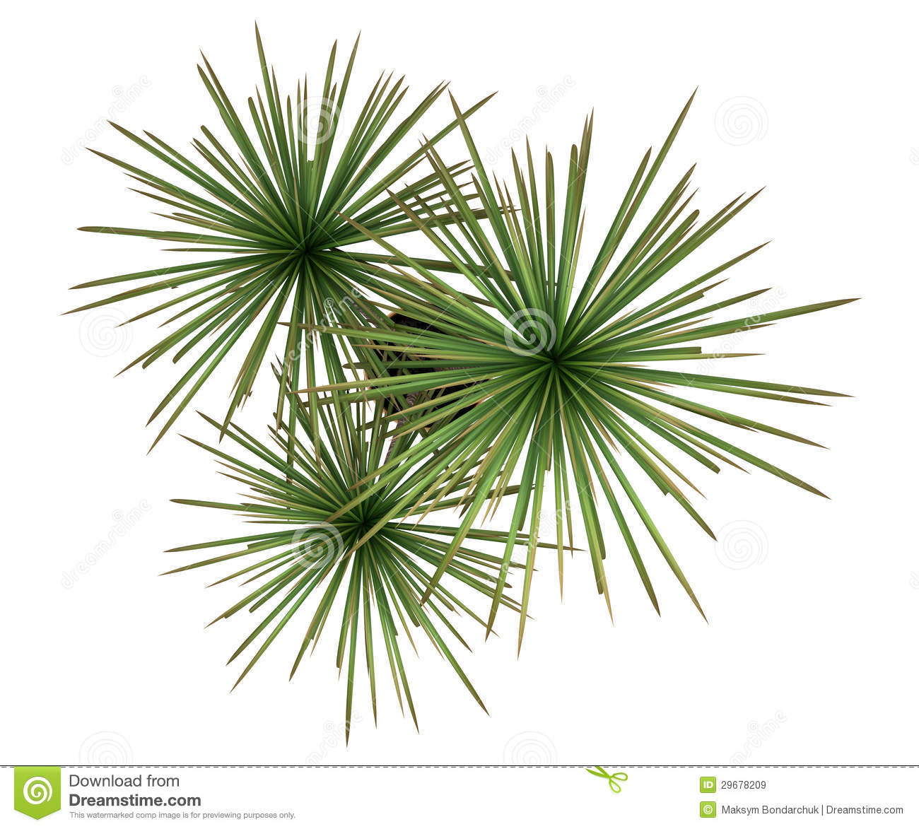 Sofa Color Topo Top View Of Dracaena Plant In Pot Isolated On White Stock