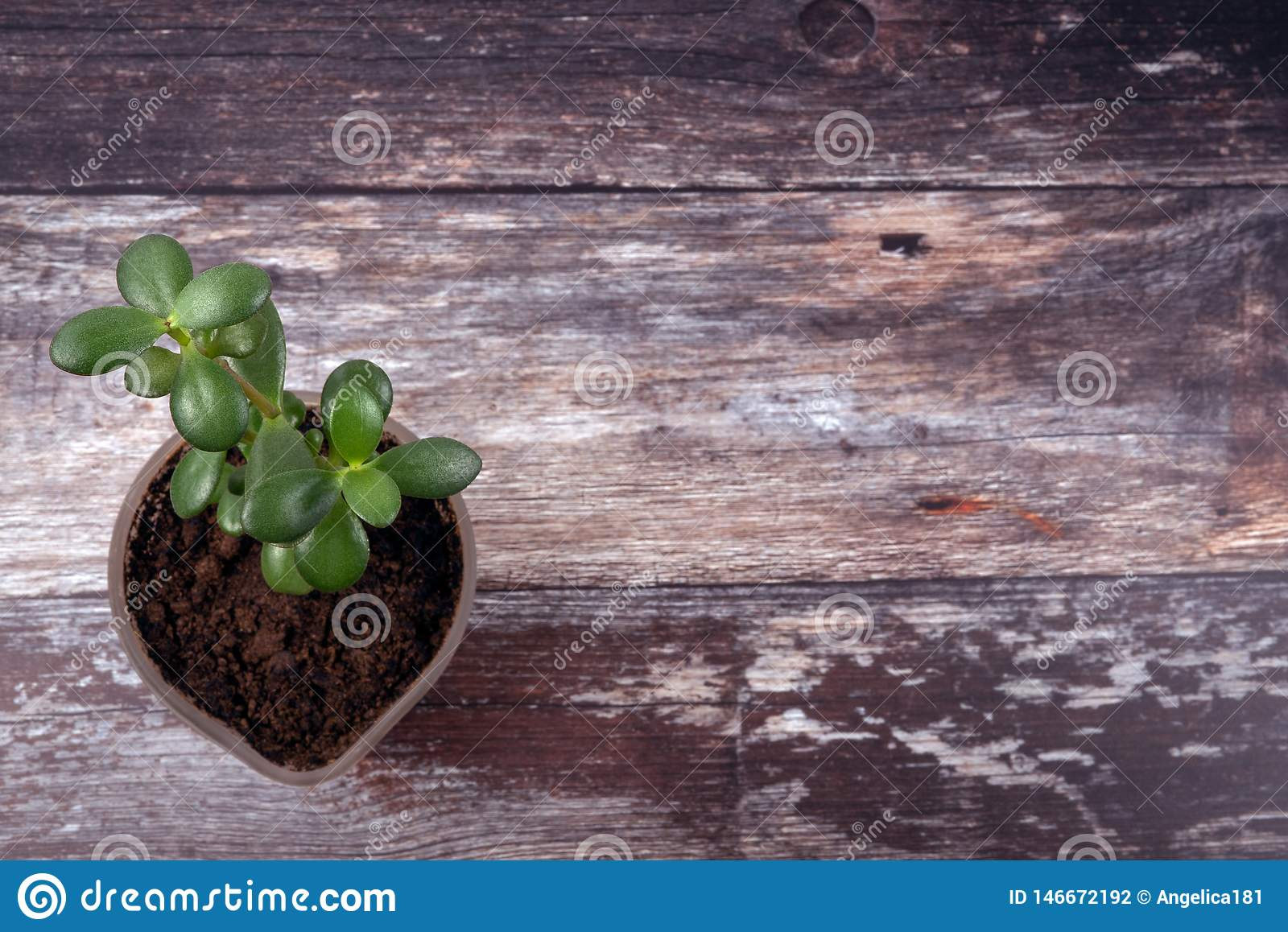 Top View Of Green Trendy Small Succulent Plant Growing In New Soil On A Weathered Wooden Tabletop Background Stock Photo Image Of Overhead Flowerpot 146672192