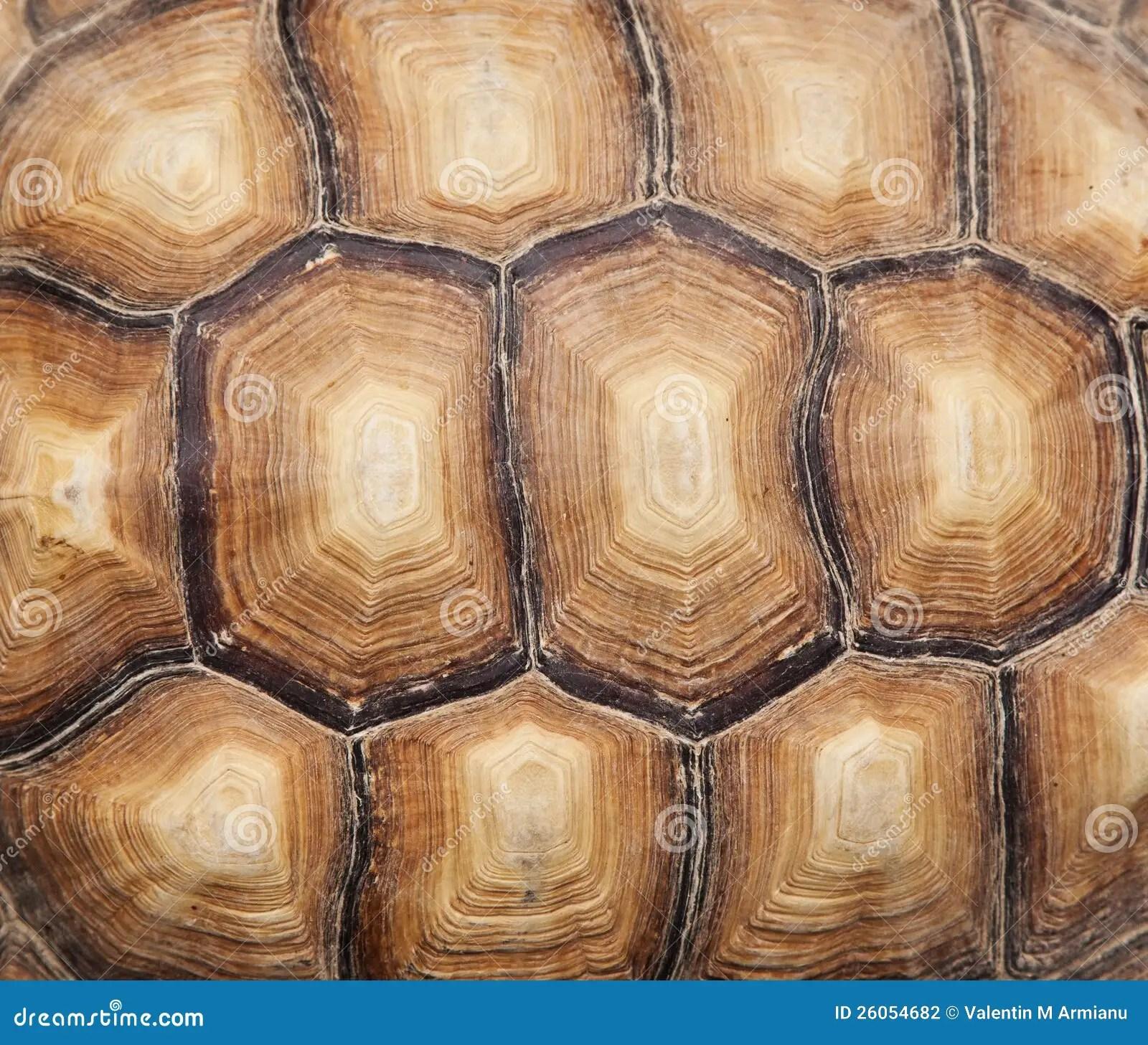 Cute Ninja Turtle Wallpaper Tortoise Shell Stock Photo Image Of Texture Closeup
