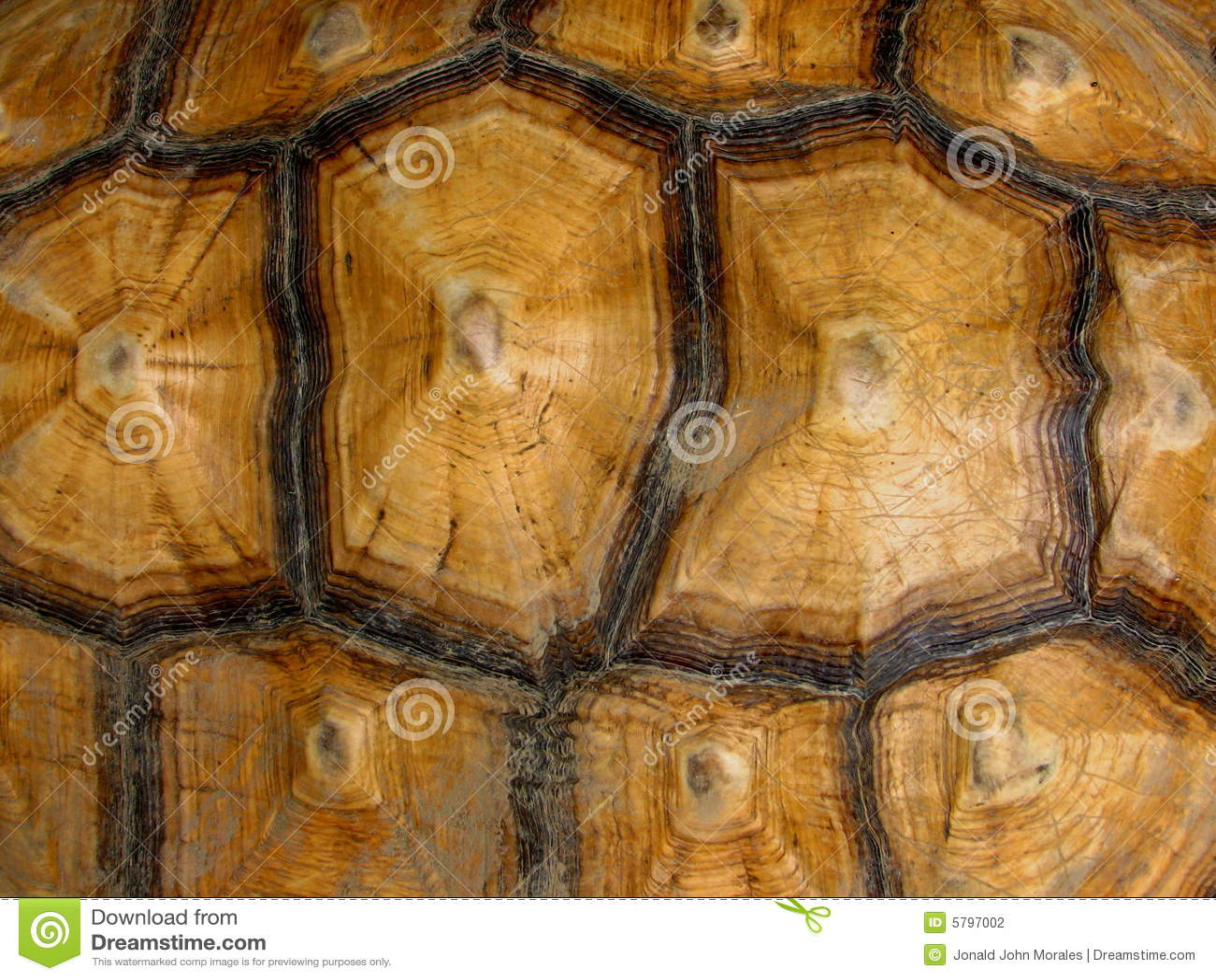 The Shield Hd Wallpaper Download Tortoise Shell Pattern Stock Photo Image Of Tortoise