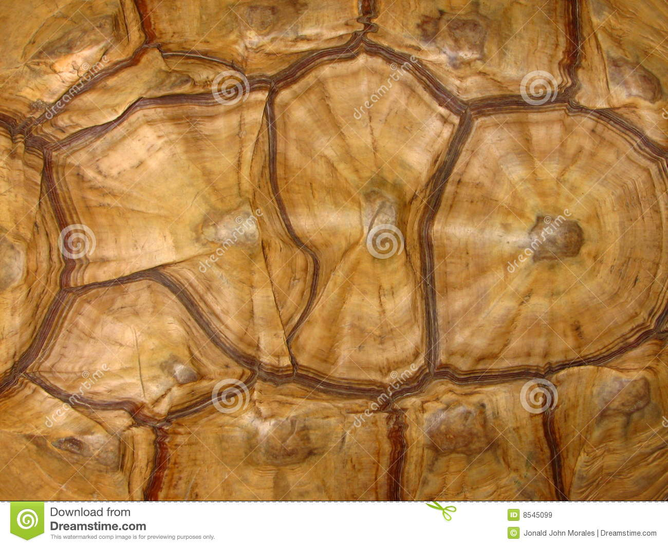 Cool Animal Print Wallpaper Tortoise Shell Pattern Stock Image Image Of Shell