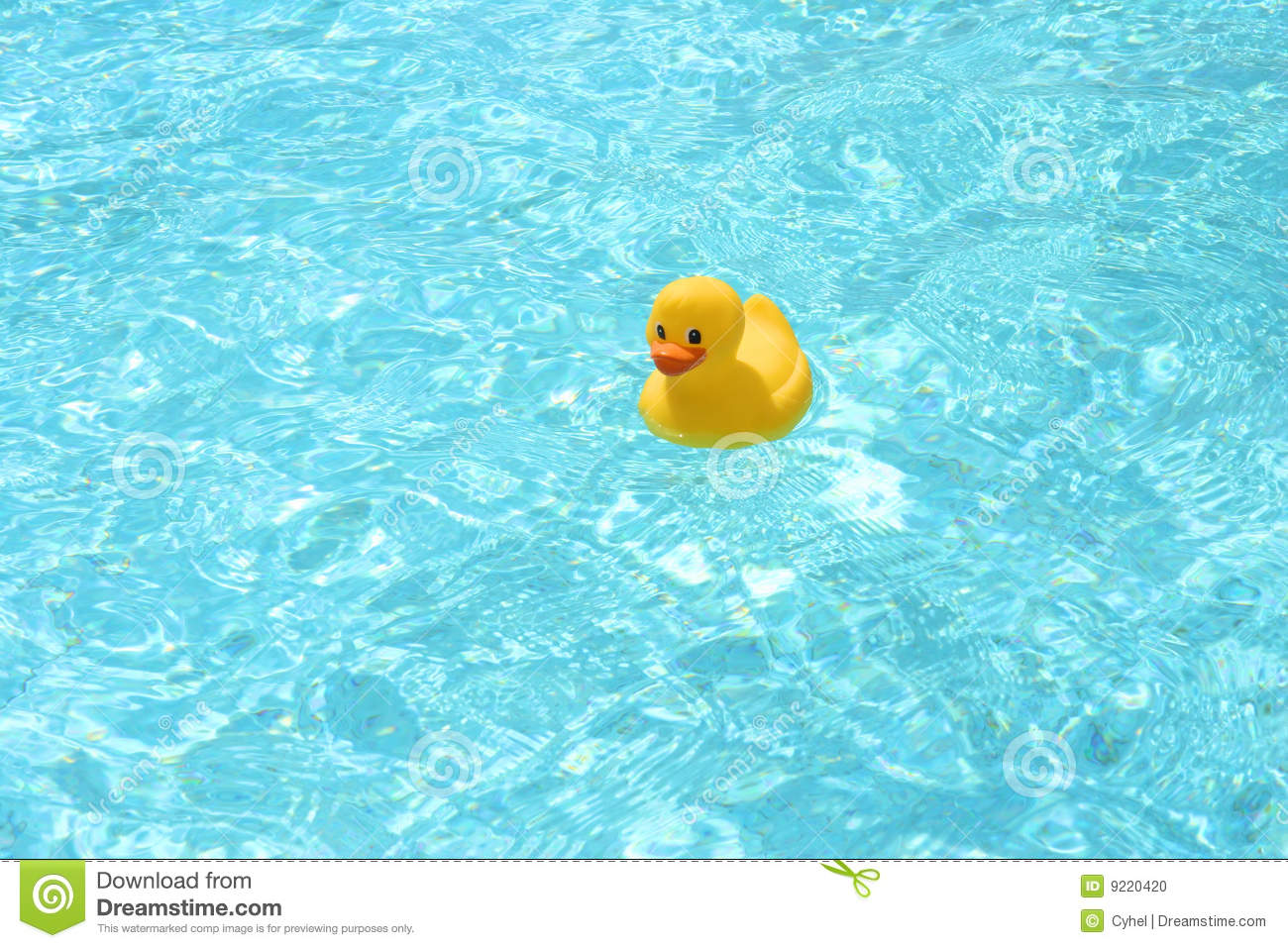 Cute Duckling Wallpaper Toy Duck In The Pool Stock Photo Image Of Blue