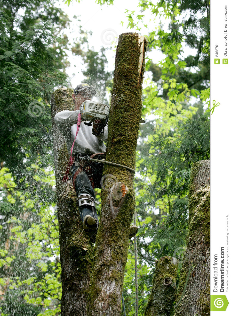 Tree Cutter Tree Cutter Stock Image Image Of Tree Diesel Service 2462761