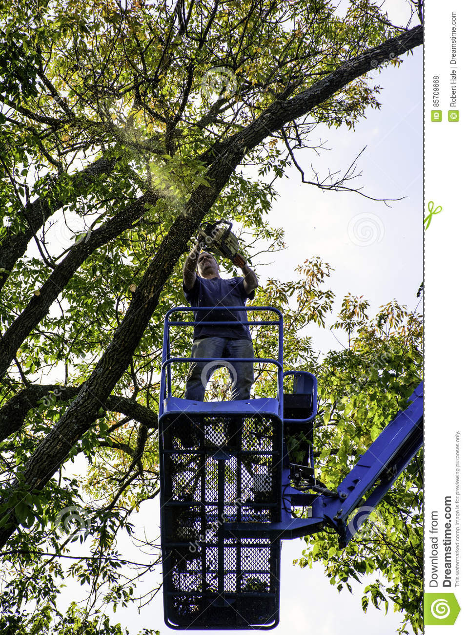 Tree Cutter Tree Cutter Stock Photo Image Of Lift Aerial Chain 85709668