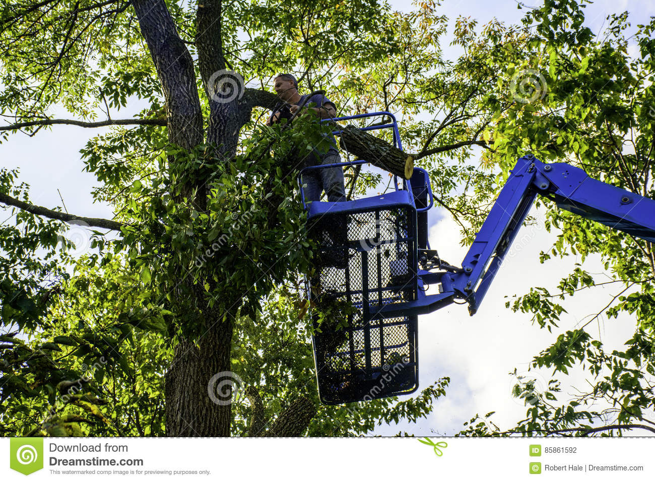 Tree Cutter Tree Cutter Stock Photo Image Of Platform Woodcutter 85861592