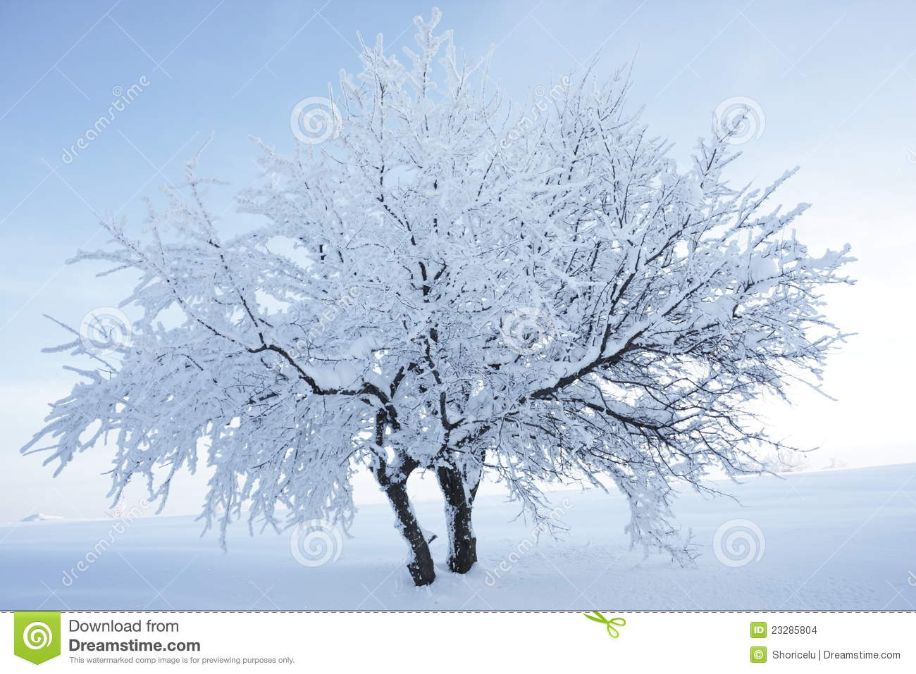 Birch Tree Fall Wallpaper Tree With Snow And Nice Background Stock Images Image