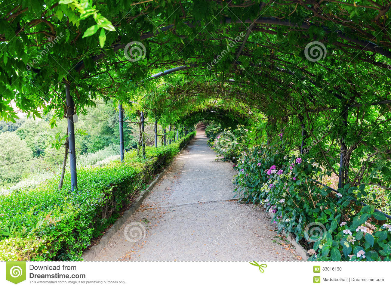 Giardino Italian Tree Tunnel In The Giardino Bardini Florence Italy Editorial