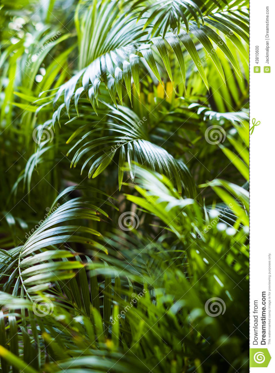 Free Hd Wallpaper For Desktop Background Tropical Exotic Palm Leaves Background Stock Photo Image