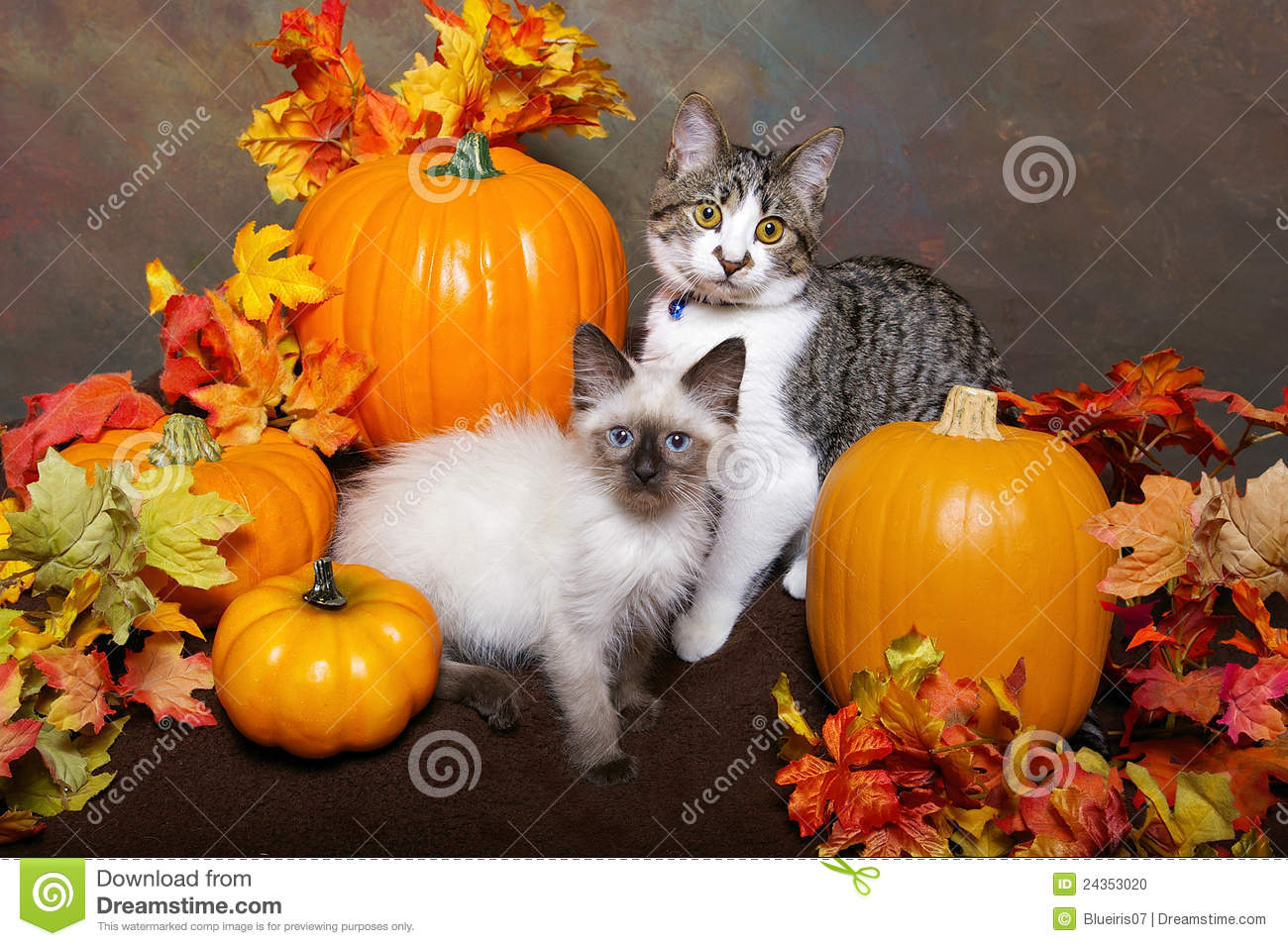 Free Fall Harvest Wallpaper Two Kittens With Fall Leaves And Pumpkins Stock Photo