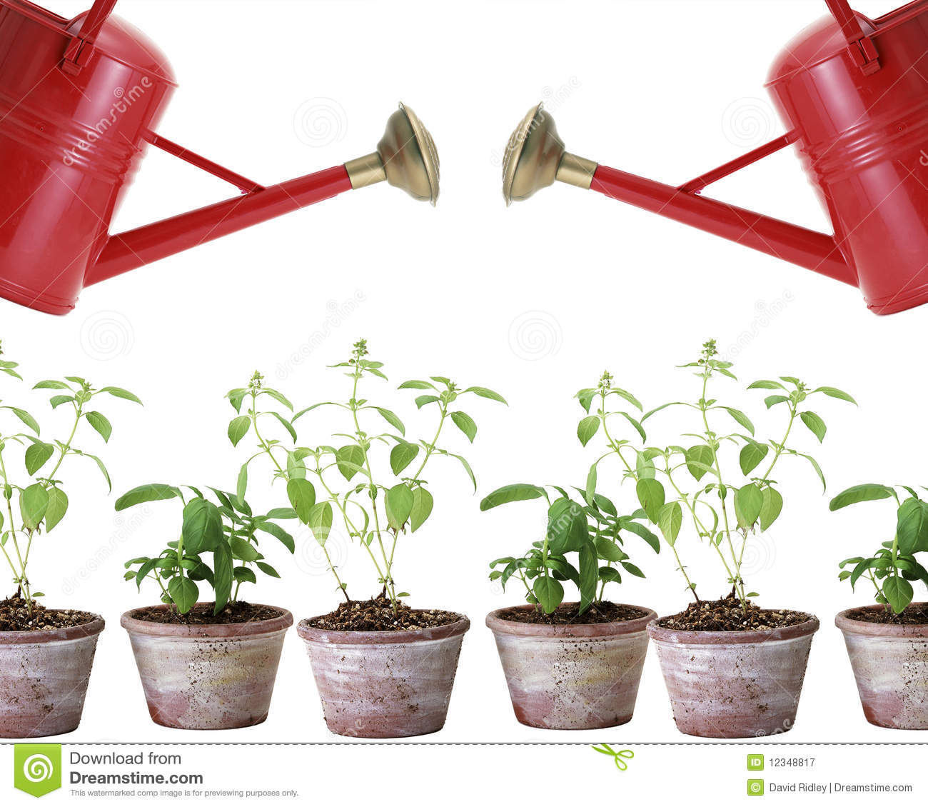Plant Watering Cans Two Red Watering Cans And Plants In Pots Stock Image