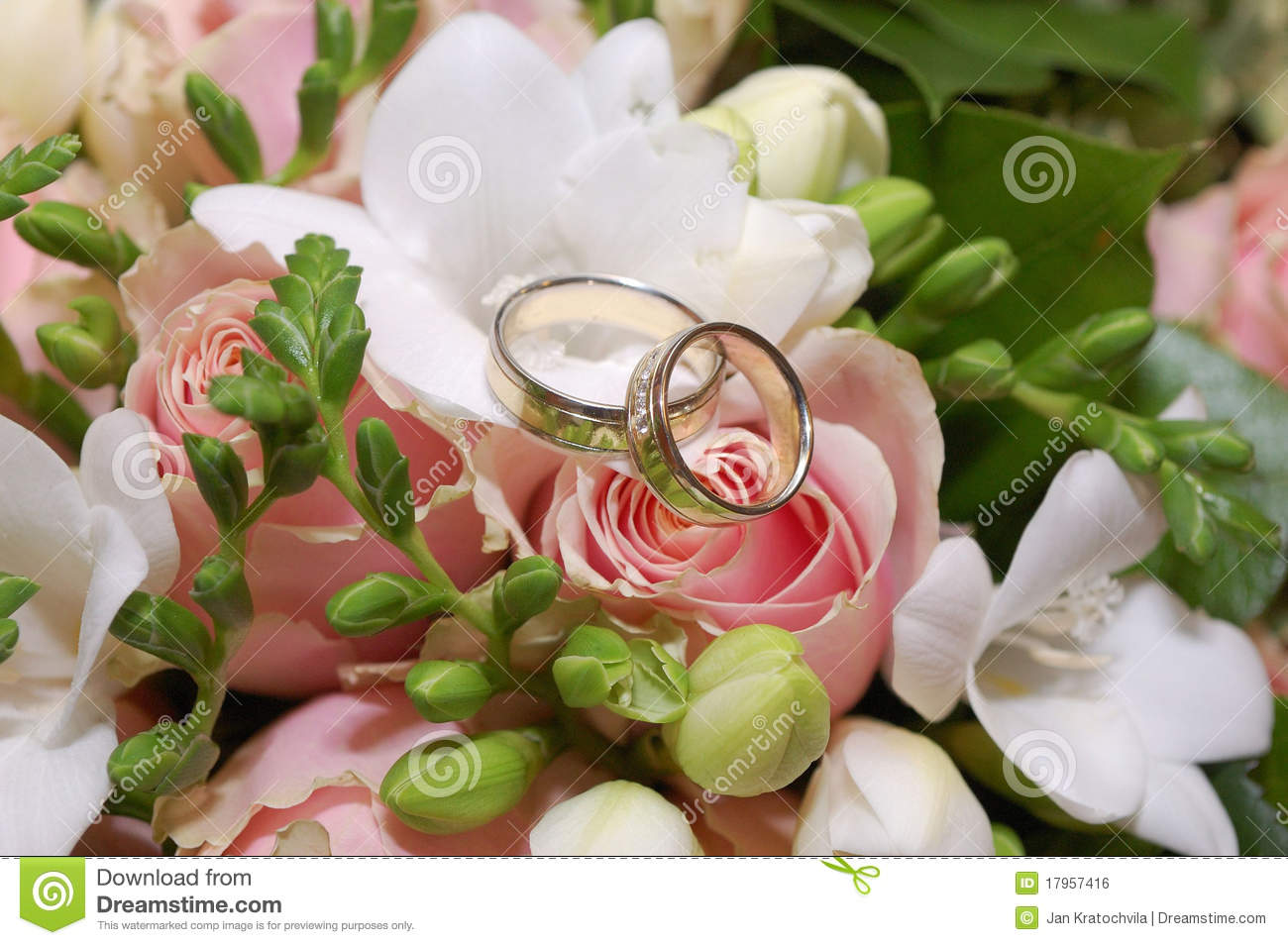 Wallpaper Primavera Hd Two Wedding Rings On Pink Rose Flower Stock Photo Image