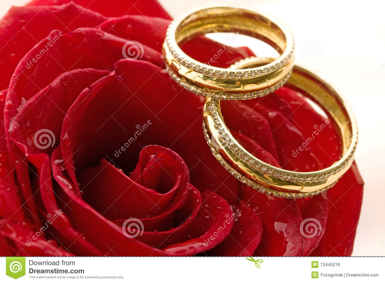 Ring Ceremony Hd Wallpaper Two Wedding Rings And Red Roses Stock Photo Image Of