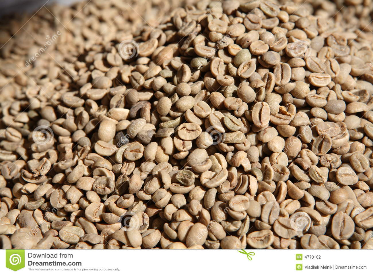 Unroasted Organic Arabica Coffee Beans Unroasted Coffee Beans Stock Photography Image 4773162
