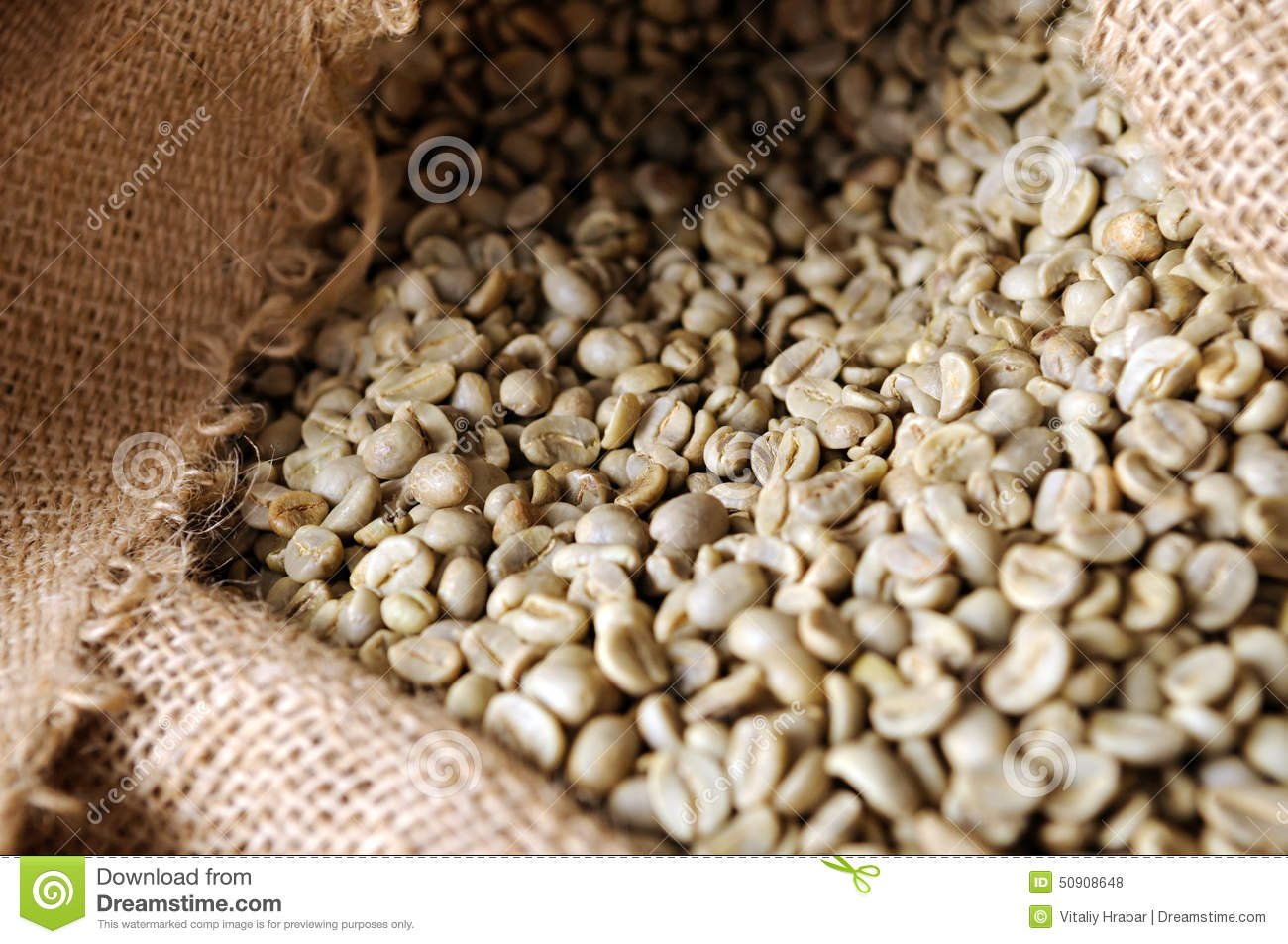 Unroasted Organic Arabica Coffee Beans Unroasted Coffee Beans Stock Photo Image 50908648