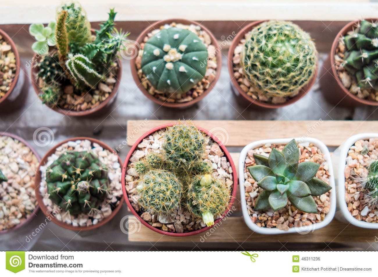 Indoor Plant Types Vaious Types Of Cactus Stock Photo Image 46311236