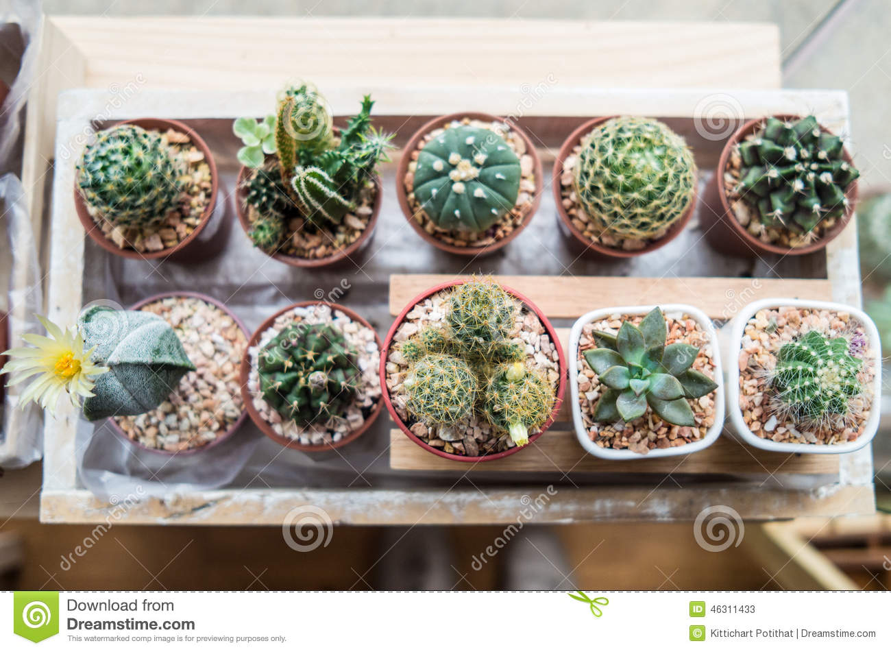 Indoor Plant Types Vaious Types Of Cactus Stock Photo Image 46311433