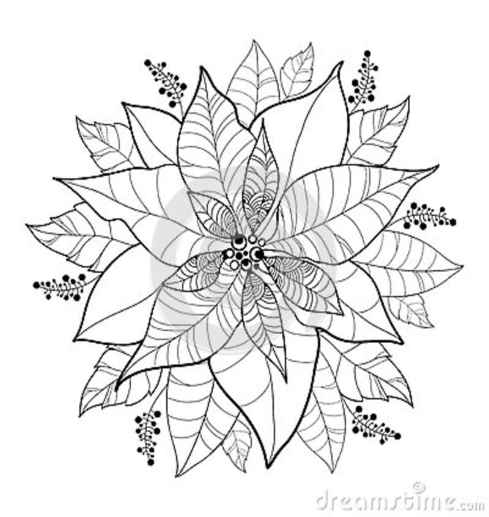 Vector Poinsettia Flower Or Christmas Star In Black Isolated On