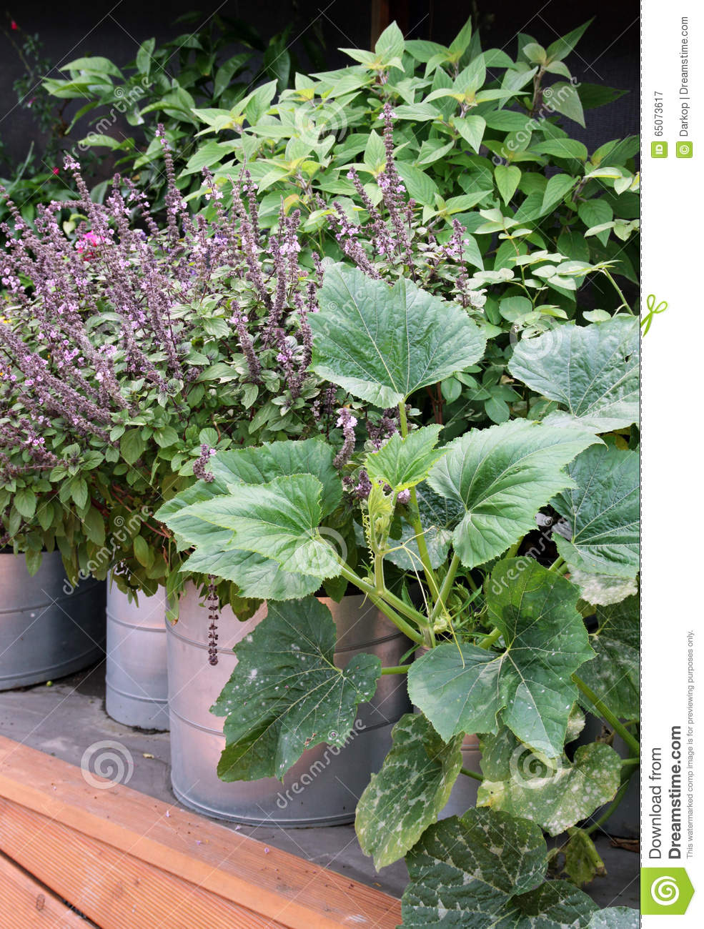 Large Garden Pots Vegetable Garden In Pots And Large Containers Stock Image Image