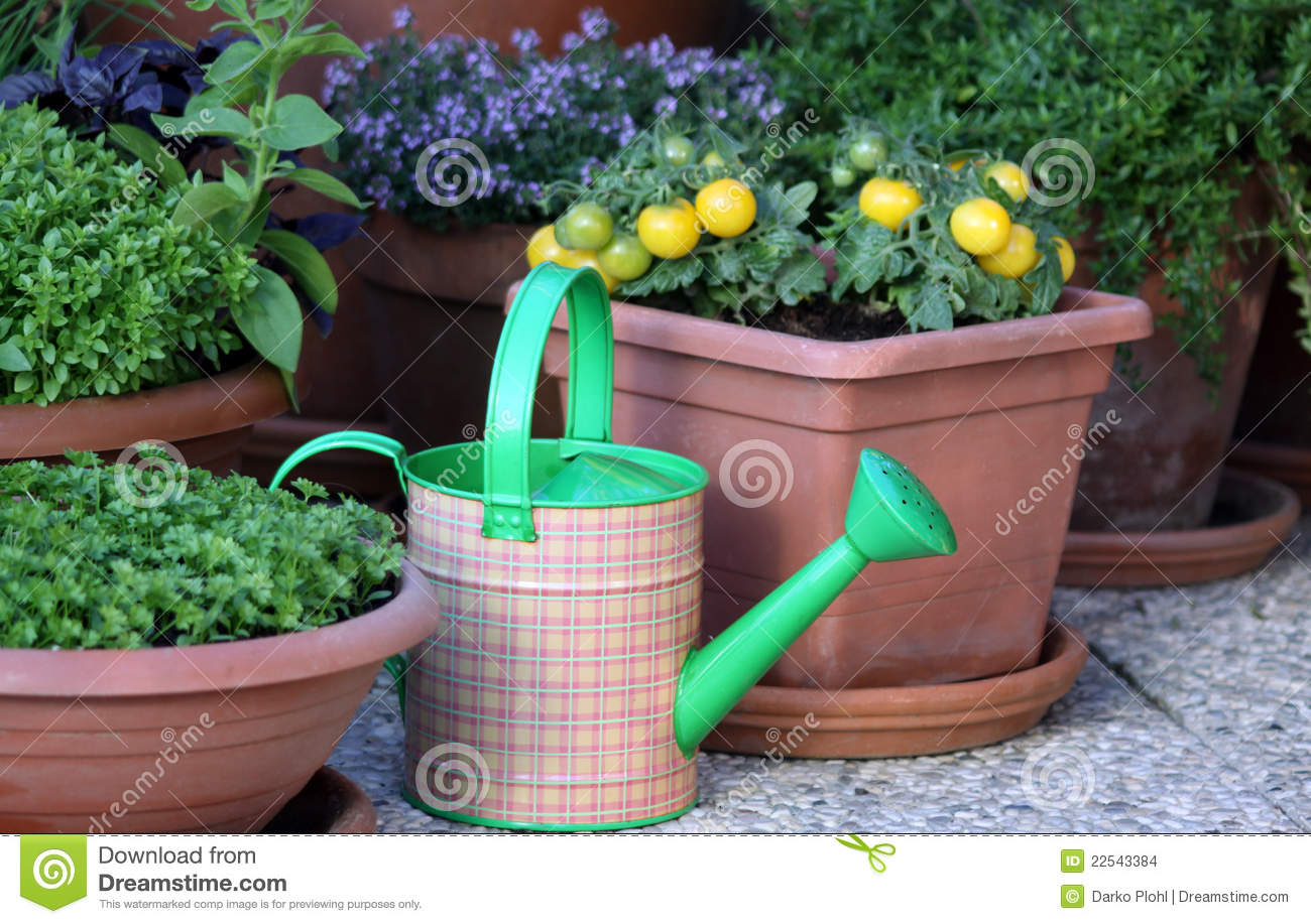 Vegetables And Herbs Plants In The Pot Stock Photo Image